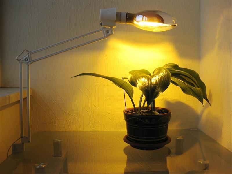 Подсветка растения газоразрядной лампой