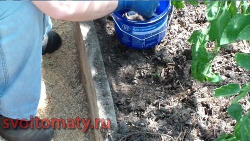 Пересыпаем яйца муравьев с муравьями в емкость