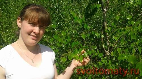 Березовые листья – лечебные свойства