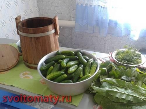 Кадка, огурцы, листья хрена, листья черной смородины и укроп